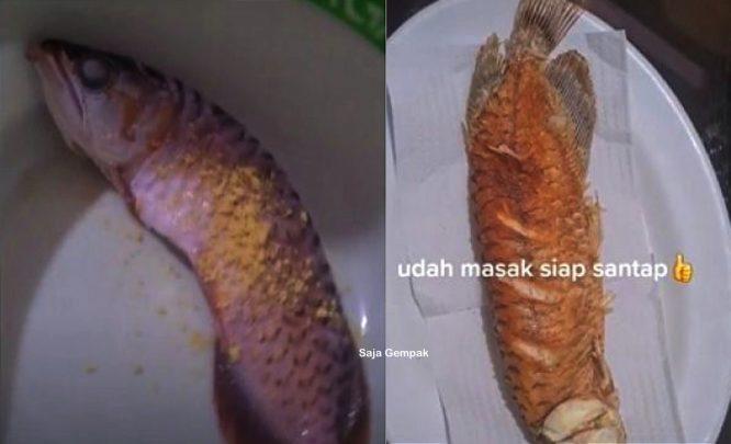 Kesal Suami Tak Mahu Bersihkan Akuarium, Isteri Goreng Ikan Arowana - arenagempak.com