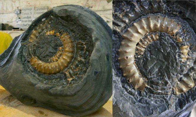 Jumpa Batu 50kg Mengandungi Fosil Berusia 190 Juta Tahun, Lelaki Teruja Saat Tahu Nilainya Mencecah Ribuan Ringgit