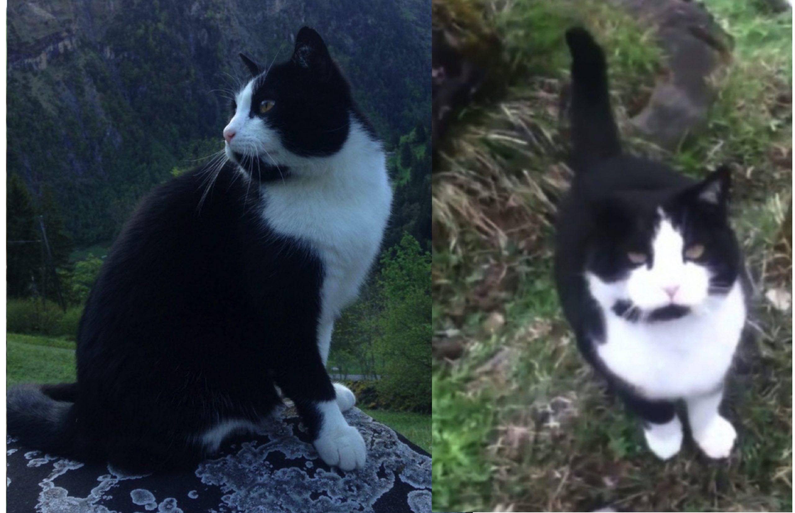 Pendaki Sesat Keseorangan Di Kawasan Pergunungan, Diselamatkan Kucing Yang Muncul Entah Dari Mana - arenagempak.com