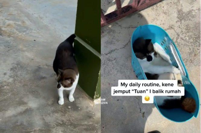 Kucing Suka Lepak Rumah Jiran, Balik Kena Dijemput Hari-hari, Siap Kena Bawa Bakul Lagi